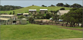 Ace Hi Riding Ranch - Accommodation Resorts