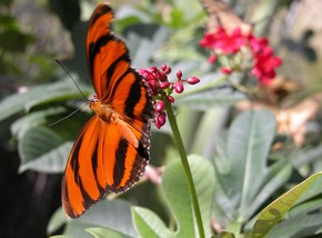 Butterfly Farm - Accommodation Resorts