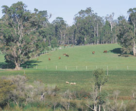 Scenic Drives - Bunbury Collie Donnybrook - Accommodation Resorts