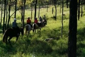 Hunter Valley Horse Riding and Adventures - Accommodation Resorts