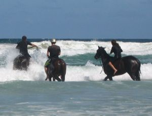 Pegasus Park Equestrian Centre - Accommodation Resorts