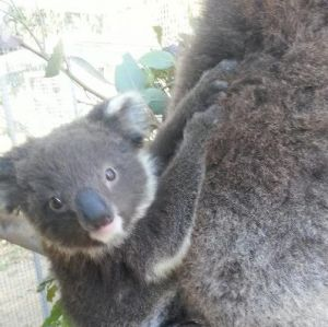 West Oz Wildlife Petting Zoos - Accommodation Resorts